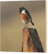 African Stone Chat Wood Print