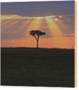 African Sunset Rays Wood Print