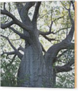 African Tree Wood Print