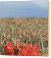African Tulip Blossom Over Pineapple Field Aloha Makawao Wood Print