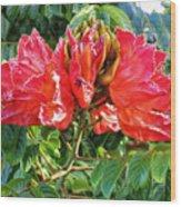 African Tulip Flower #2 Wood Print