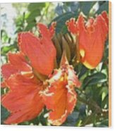 African Tulips Wood Print