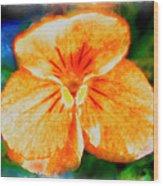 African Violet In Rancho Santa Fe 2 Wood Print