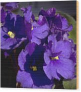 African Violets Wood Print