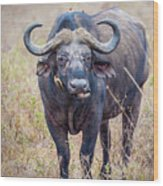 African Water Buffalo And Friends Wood Print