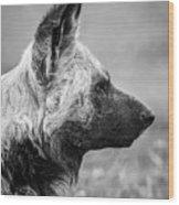 African Wild Dog Wood Print
