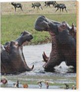 African Wildlife Montage - Hippos Wood Print