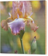 Afternoon Delight. The Beauty Of Irises Wood Print