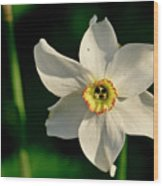 Afternoon Of Narcissus Poeticus. Wood Print