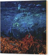 Afternoon On The Reef Wood Print