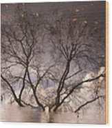 Afternoon Reflection Wood Print