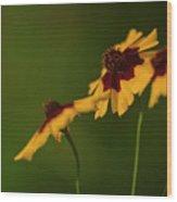 Afternoon Sun Wood Print