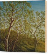 Afternoon Sycamores Wood Print
