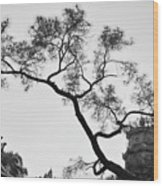 Afternoon Thien Mu Pagoda Wood Print