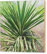 Afternoon Yucca Wood Print