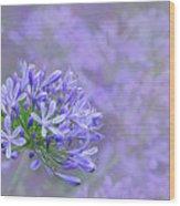 Agapantha Lilac Pastel By Kaye Menner Wood Print
