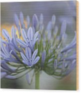 Agapanthus Africanus - Lily Of The Nile 2 Wood Print
