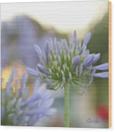 Agapanthus Africanus - Lily Of The Nile Wood Print