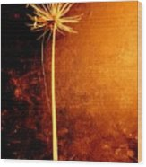 Agapanthus After The Storm Wood Print