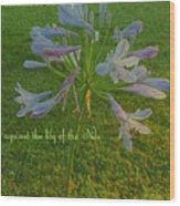 Agapanthus Dawn Wood Print