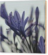 Agapanthus - Love Flower -2  Wood Print