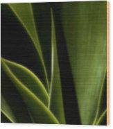 Agave Wood Print