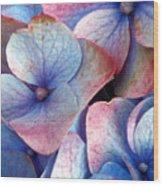 Ageing Hydrangea Wood Print