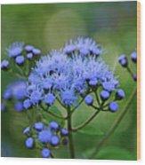 Ageratum Blue Wood Print