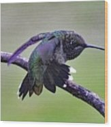 Aggressive Behavior - Ruby-throated Hummingbird Wood Print
