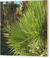 Agua Caliente Park Wood Print