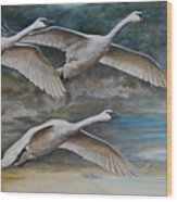 Ahead Of The Storm - Trumpeter Swans On The Move Wood Print