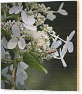 Ailanthus Webworm Moth 1 Wood Print