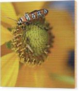 Ailanthus Webworm Moth #5 Wood Print