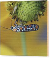 Ailanthus Webworm Moth #6 Wood Print
