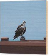 Air And Sea Hunter Wood Print