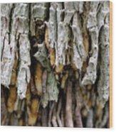 Air Roots Wood Print