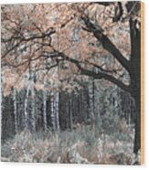 Airy Autumn In Woods Wood Print