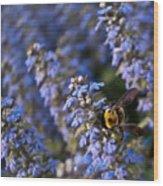 Ajuga And Bumblebee Wood Print