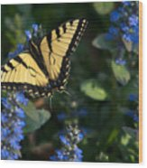 Ajuga With Tiger Butterfly Wood Print