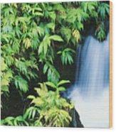 Akaka Falls State Park Wood Print