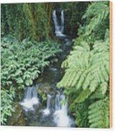 Akaka Falls Stream Wood Print