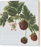 Akala Berries Wood Print