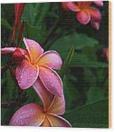 Akeakamai Pua Melia Tropical Plumeria Wood Print