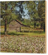 Alabama Cotton Field Wood Print