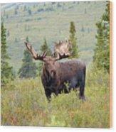 Alaska Monarch #3 Wood Print