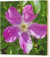 Alaska Rose Wood Print