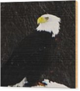 Alaskan Bald Eagle Wood Print