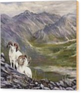 Alaskan  Dalls Sheep Wood Print