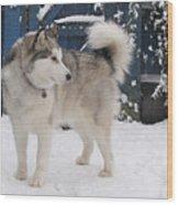 Alaskan Malamute In Snow 2 Wood Print