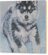 alaskan Malamute pup in snow Wood Print